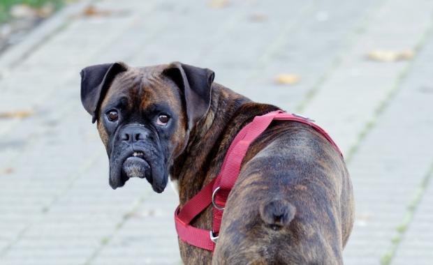 Image of dog looking back at camera